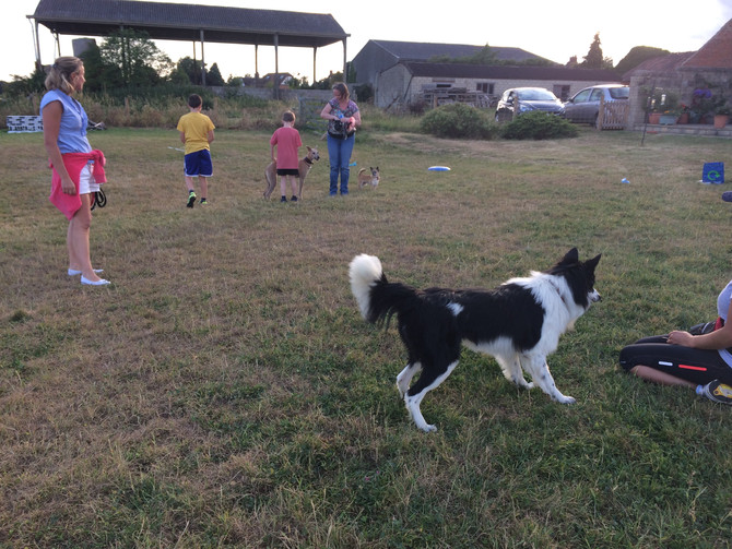 Agility Classes - Almost full!