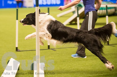Dog Agility Classes Bicester
