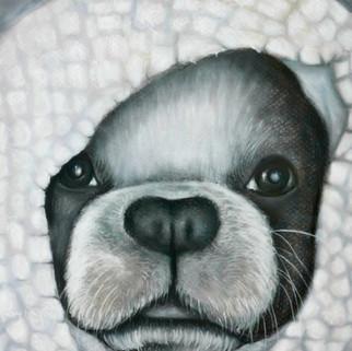 Susan_Coffey_Boston_Terrier.jpg