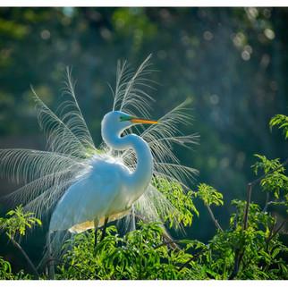 Susan_Coffey_Gatorland_Bird.jpg