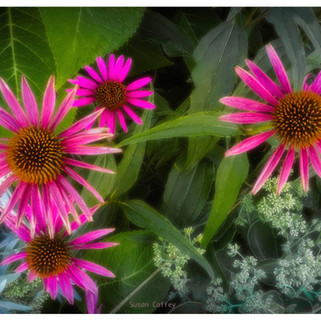 Susan_Coffey_Flowers.jpg