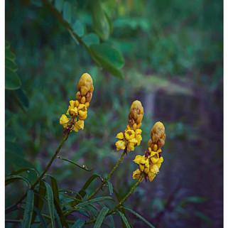 Susan_Coffey_Amazon_Rainforest.jpg