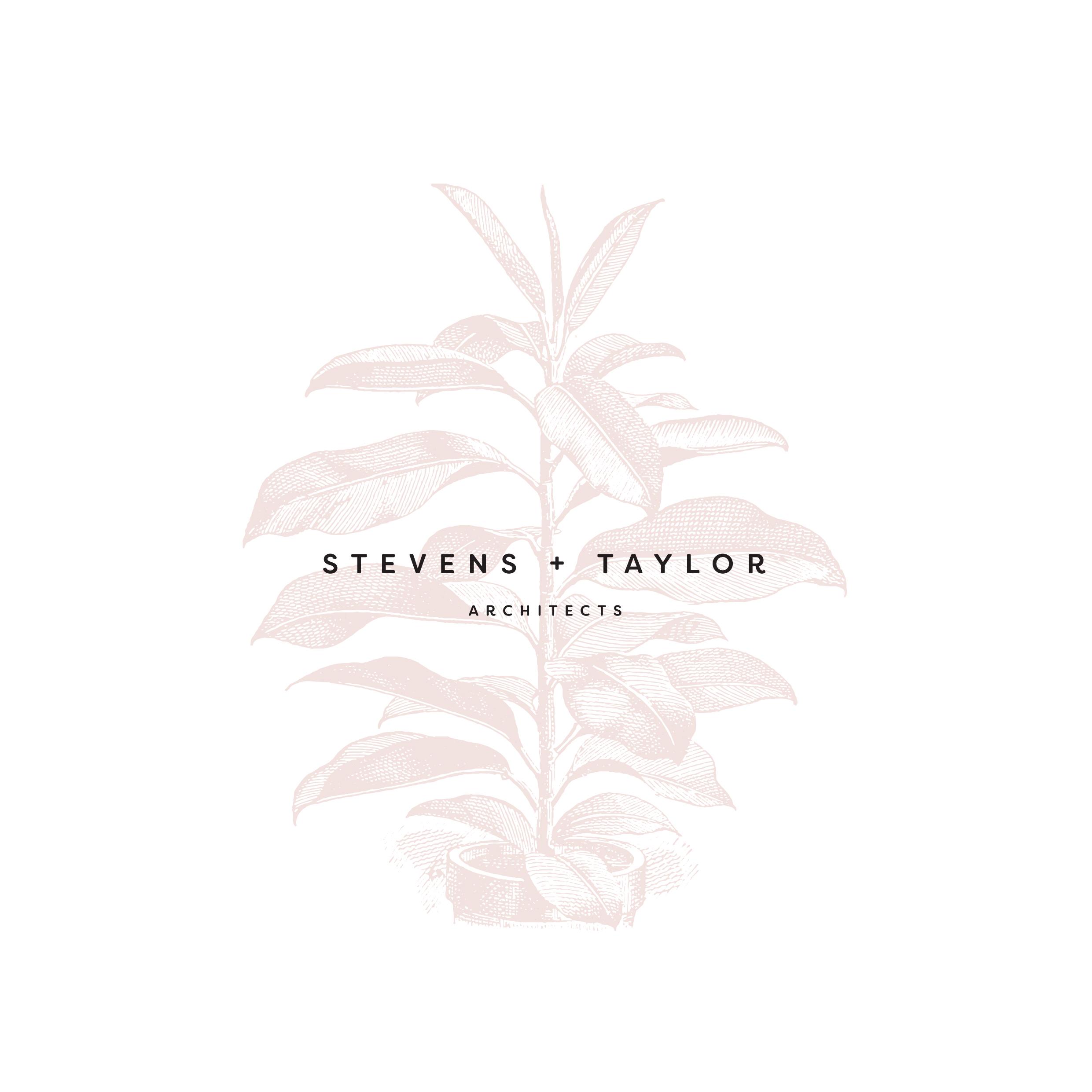 stevens taylor-01