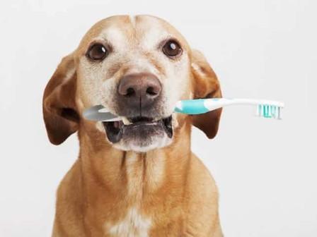 Produto dentifrício para uso exclusivo em animais
