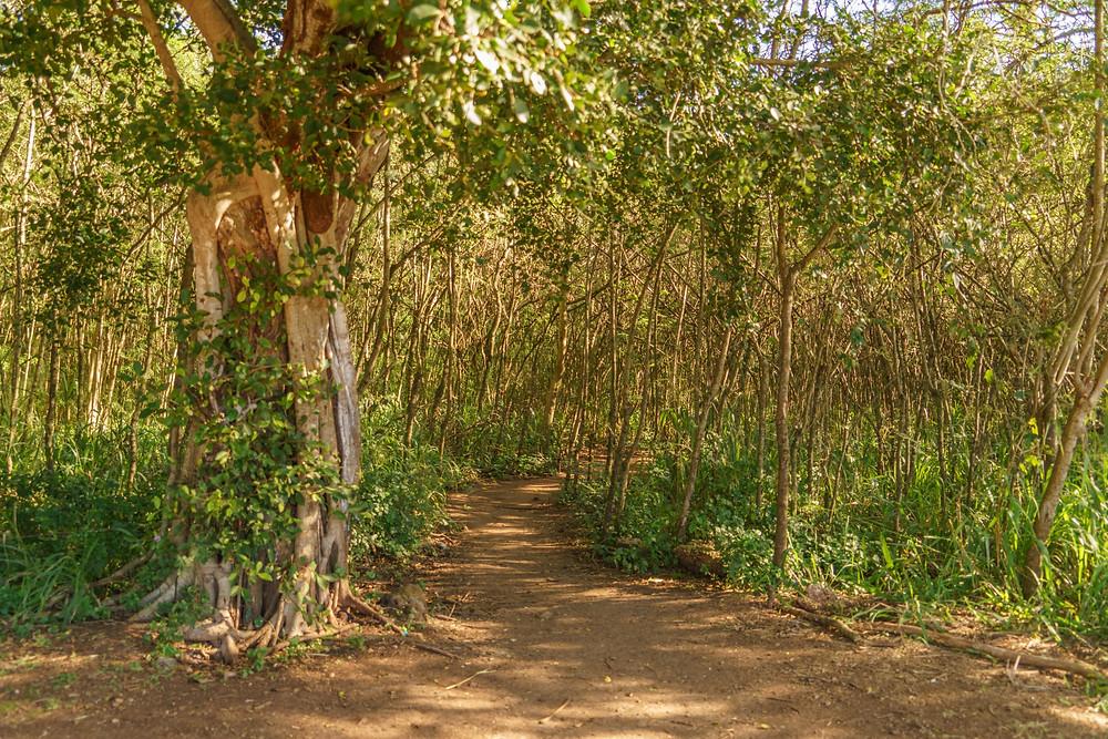 最初は低い木に覆われたなだらかな道が続きます (PHOTO/Tomohito Ishimaru)