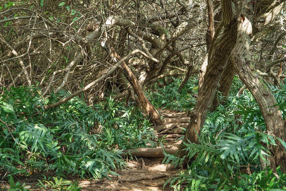 ジブリちっくな木の枝に覆われた道が出てきました。ここは腰をかがめないと進めません(PHOTO/Tomohito Ishimaru)
