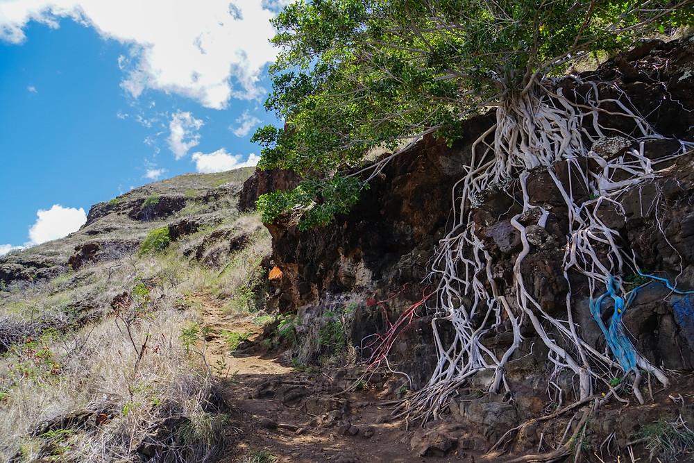 木の根っこががっつり見えるここにきたら3分の1くらいの地点でしょうか。登山道はほぼ日陰がないので、こういう場所で休憩するとよいでしょう  (PHOTO/Tomohito Ishimaru)