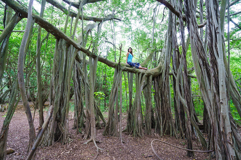 モデルを木に登らせてみたりして。これでも結構高いっすよ。良い子は危ないから真似しないでね (Photo/Tomohito Ishimaru)