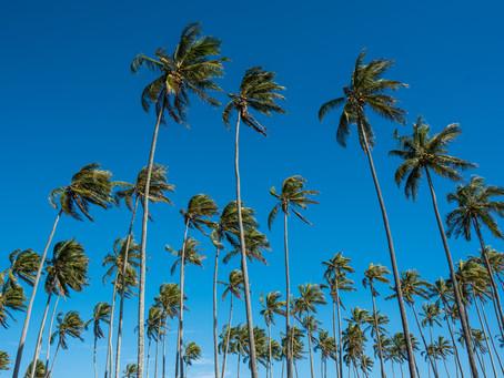 椰子の木にまつわるエトセトラ