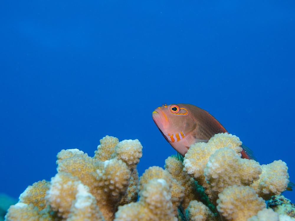 小さな魚もかわいいよ(Photo/Tomohito Ishimaru)