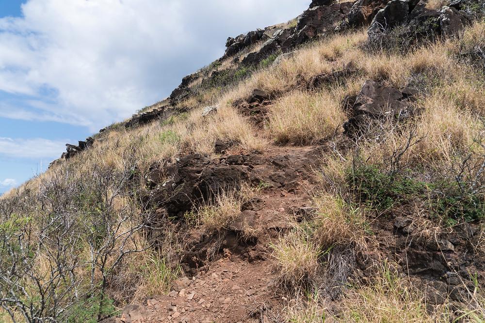 なんとなくな獣道な斜面を登ります。少しづつ急になります(Photo/Tomohito Ishimaru)