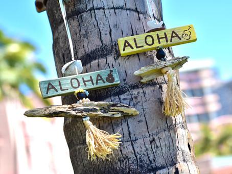 ハワイ移住4年を迎えて「フォトグラファーとしてハワイに移住してよかったこと」