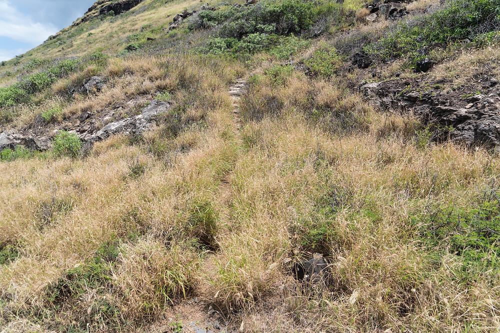 フェンス沿いを歩いて3分くらいでしょうか。山へ続く獣道があります。分かりづらいですが注意すれば見つかるでしょう。ここがスタートです(Photo/Tomohito Ishimaru)