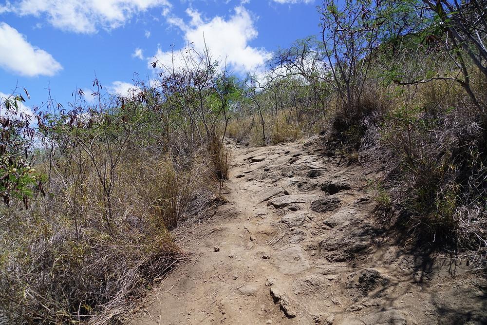登山道はこんな感じが続きます。そんなに急斜面はないですが、砂が乾いていて滑りやすいので注意 (PHOTO/ Tomohito Ishimaru)