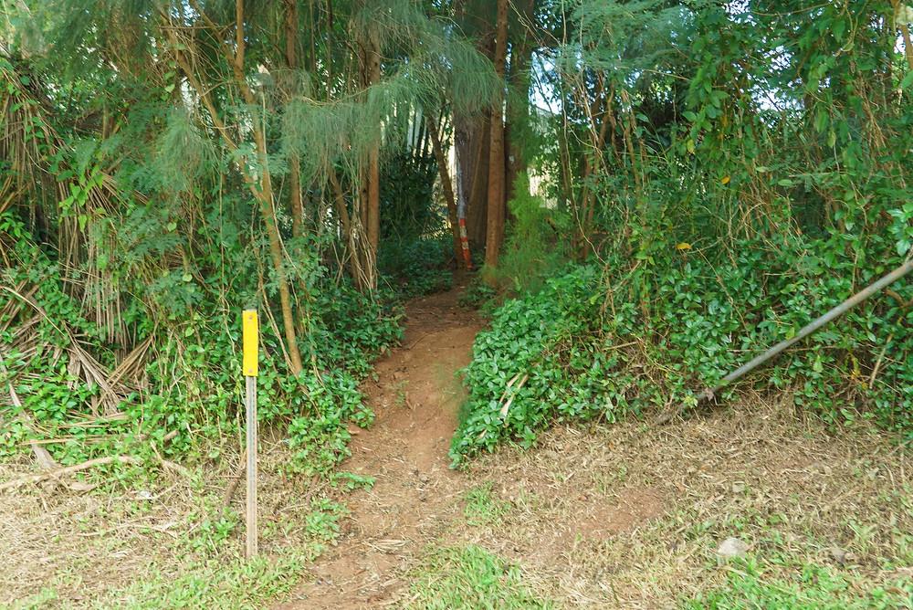 通り沿いの森を見ながら歩くとすぐにトレイルの入り口が見つかります。黄色い目印の棒があります(PHOTO/Tomohito Ishimaru)