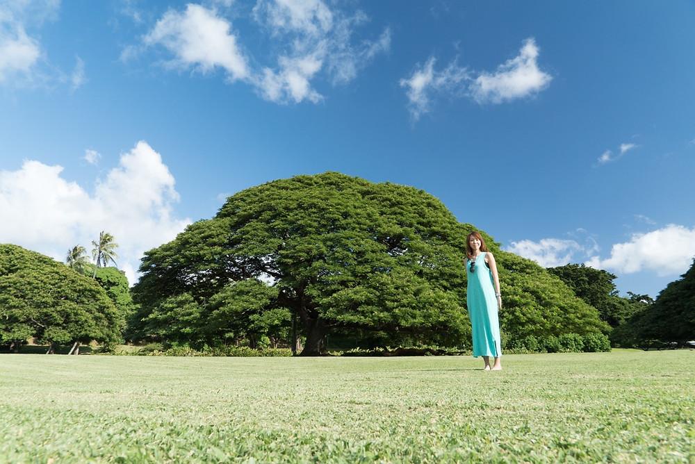 ハレイワを後にして向かったのはこの木なんの木でおなじみのモアナルアガーデン
