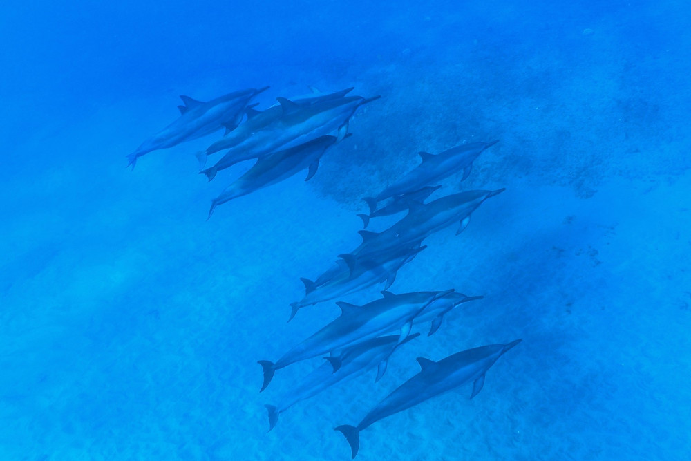 イルカの群れもラッキーなあなたなら水中で見られるかも。ボート上からは結構な確率で見られますよ(PHOTO/Tomohito Ishimaru)