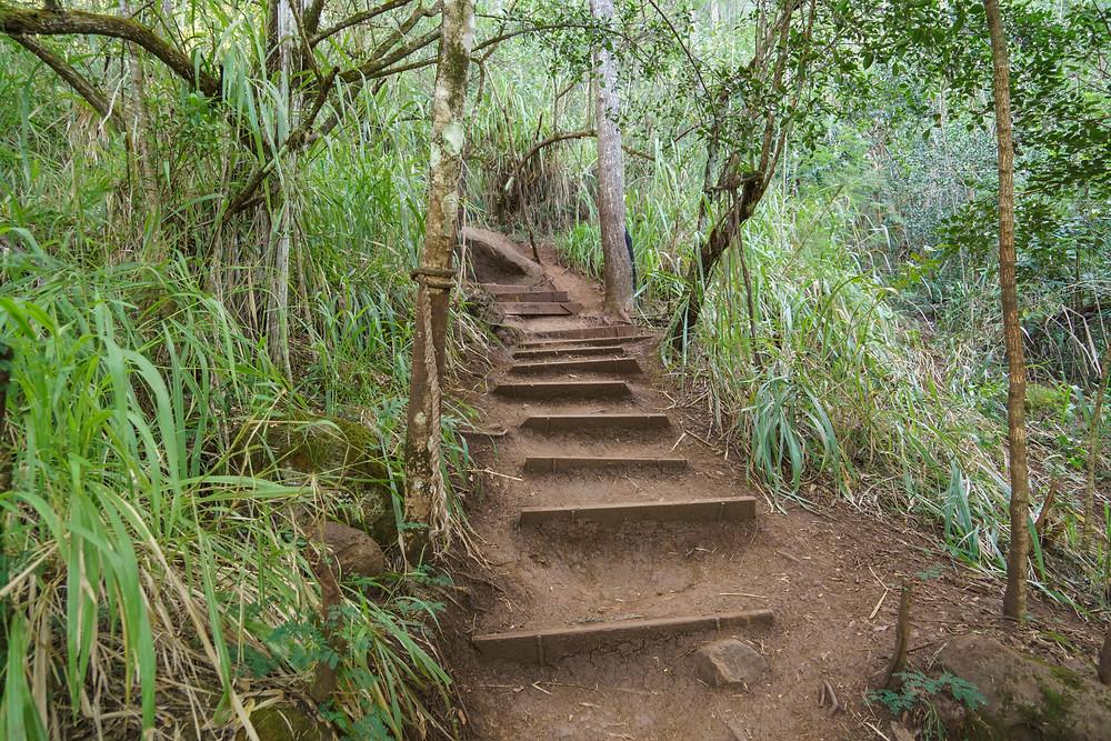 少しずつ傾斜がきつくなり、ステップが設置されているところもでてきます (PHOTO/Tomohito Ishimaru)