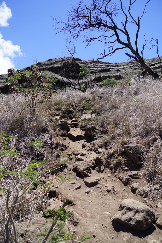 ここがトレッキング全体で一番急斜面なところ。写真ではすごい角度に見えるけど実際にはそれほどでも。手をつかずに登れます  (PHOTO/Tomohito Ishimaru)