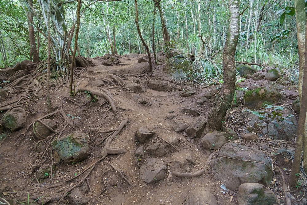 5分ほど進むと少し険しくなり、登山道らしくなってきます (PHOTO/Tomohito Ishimaru)