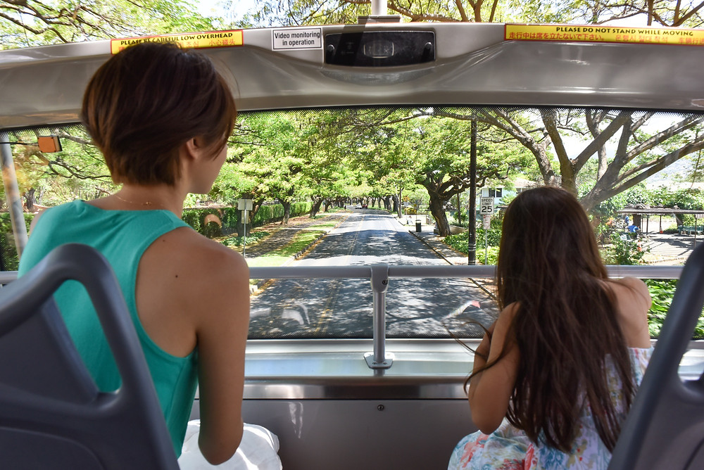 ホノルルズー横のPaki Avenueの並木も実はすっごい迫力。まさに気のトンネルを抜けていく感じ (PHOTO/Tomohito Ishimaru)