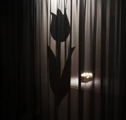 Black Tulip 02