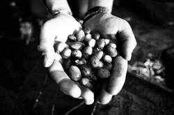 Olive Picking #3