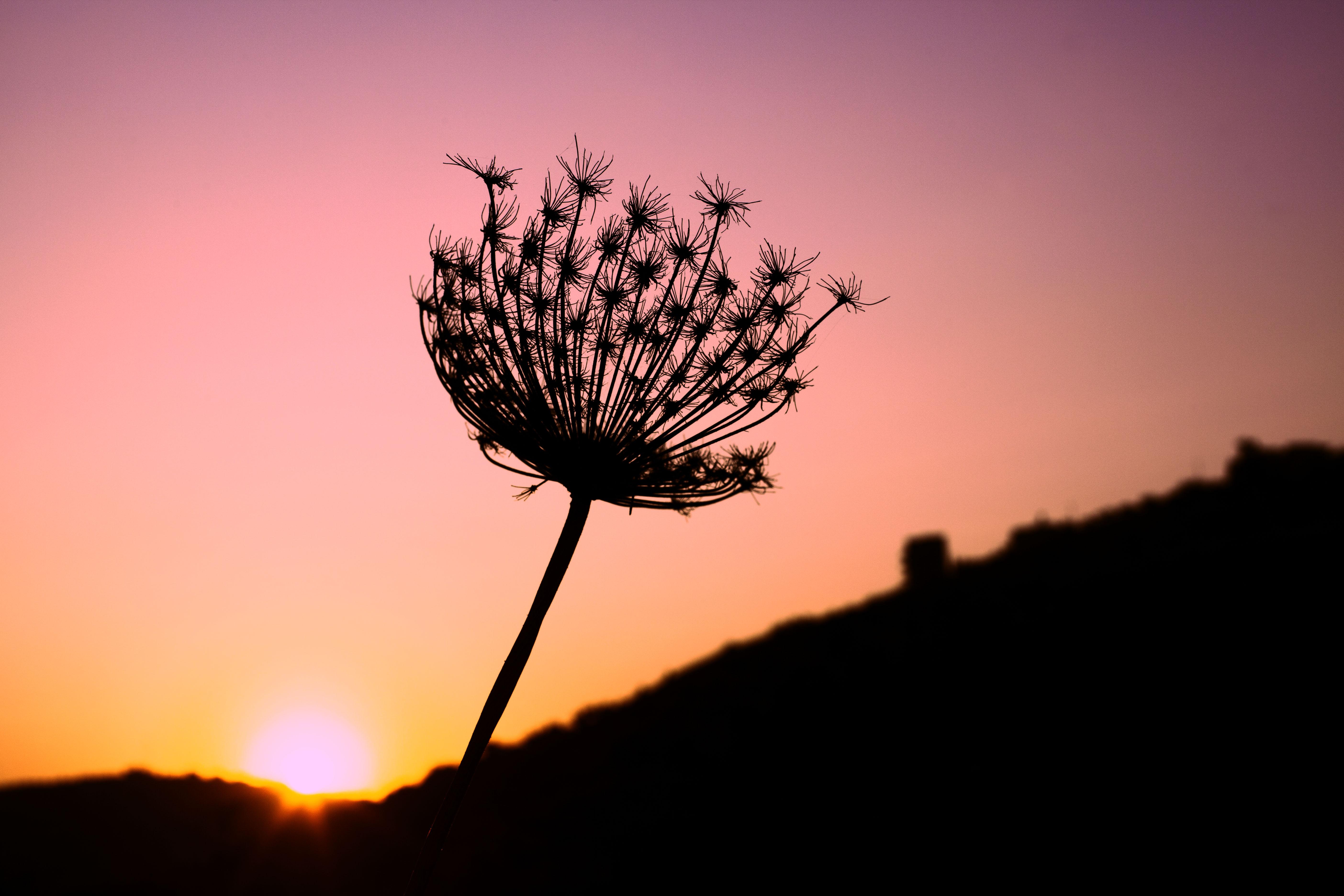 fleur_couché_de_soleil
