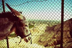 donkey head_color