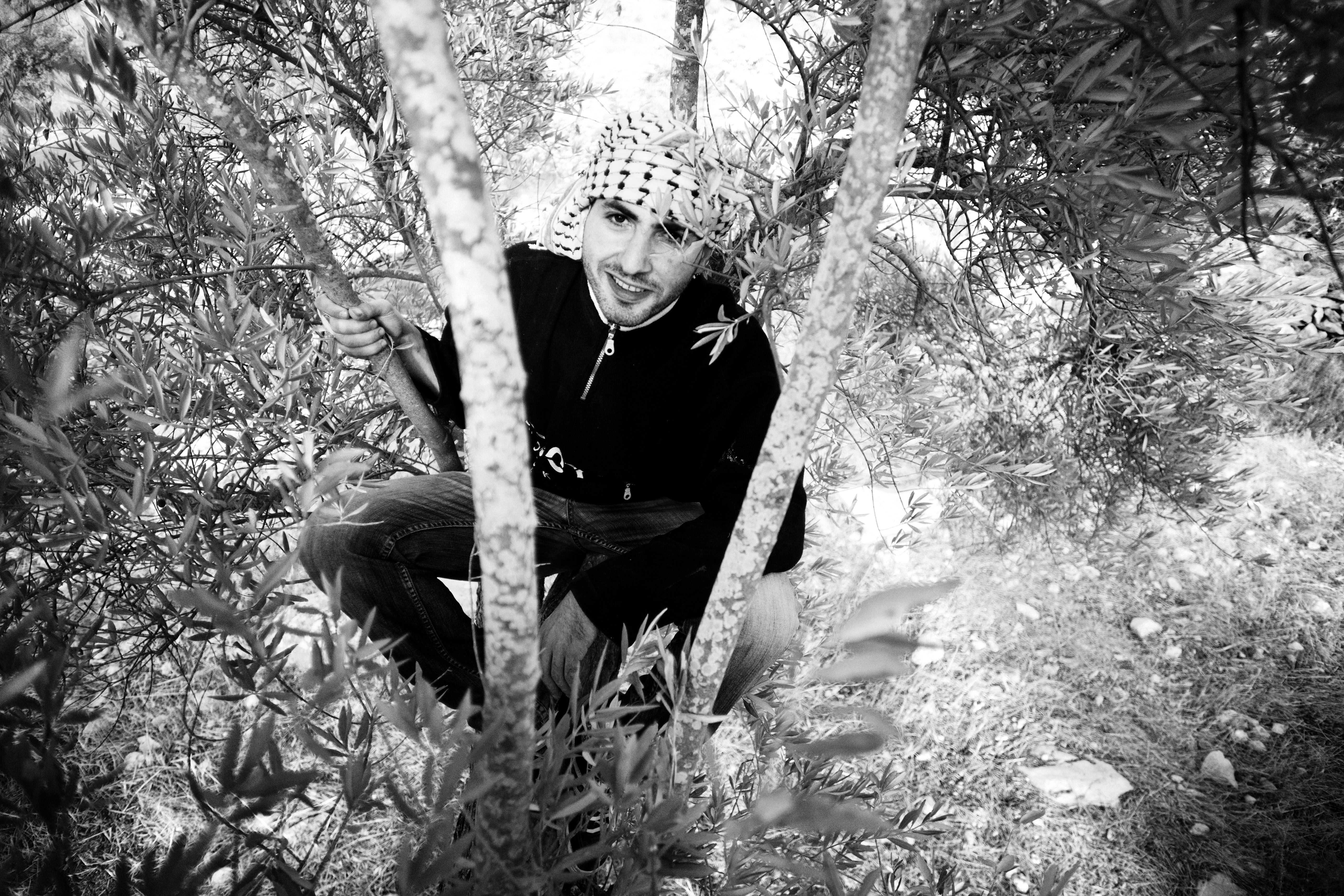 Olive Picking #1
