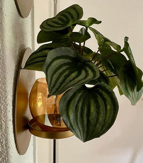 Windlicht/Vase für Wand
