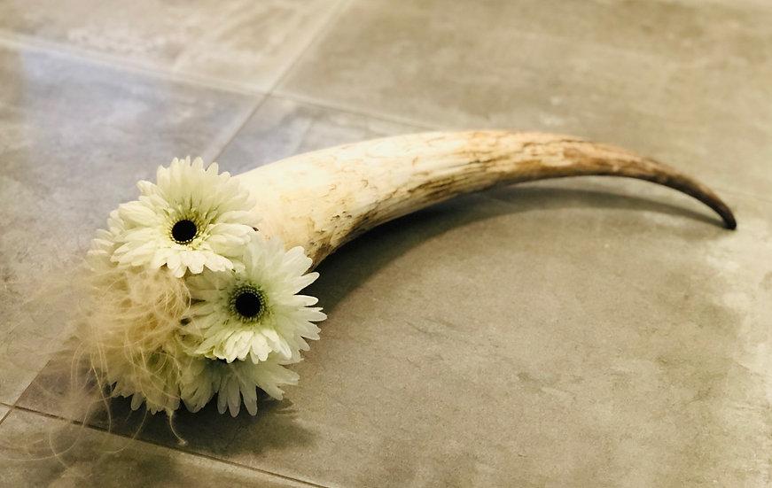 Rinderhorn mit Blumen