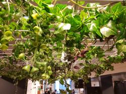 Le Pavillon - plafond végétal