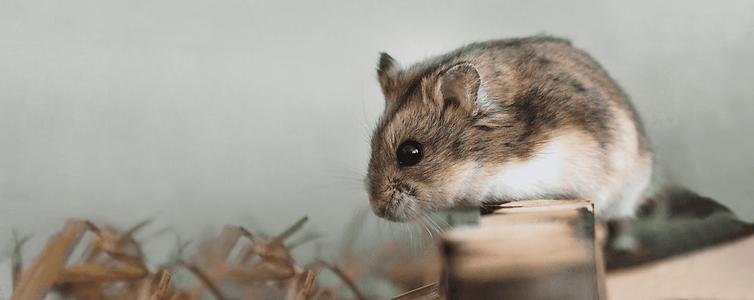 toptan-kemirgen-tavsan-hamster-yemi-malzemesi-urunleri.png