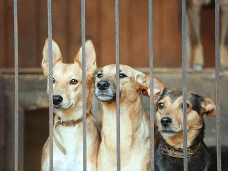 Köpek Sahiplenmek İsteyenler, Önce Yazımızı Okumalısınız!