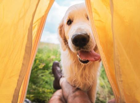 Evet, Köpeğiniz tatilde! Beslenme ve Diğer İpuçları