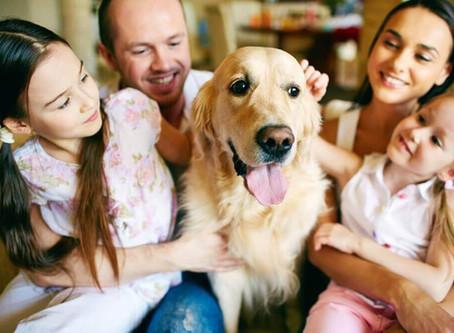 Evde Evcil Hayvan Beslemenin Faydaları ve Zararları Nelerdir ? Uzmanlar Ne Diyor ?