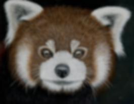 Red Panda by Ayse Rifat Wildliife Artist