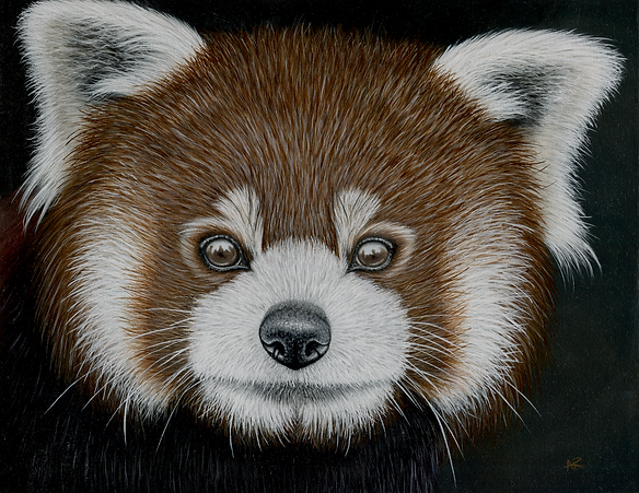 Red Panda Painting by Ayse Rifat Wildlife Artist