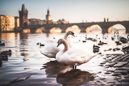 Prag, Prague