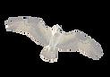osprey-flying-in-the-air-removebg_edited
