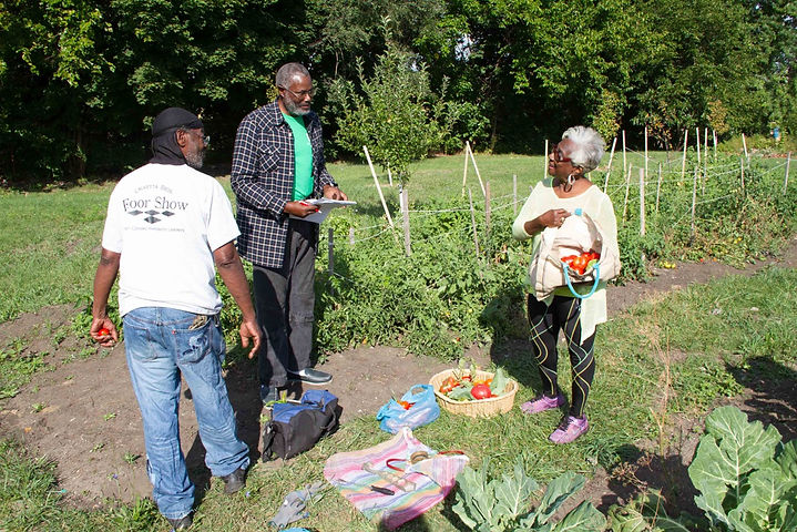 community, harvest, vegetables, purple oasis, community garden