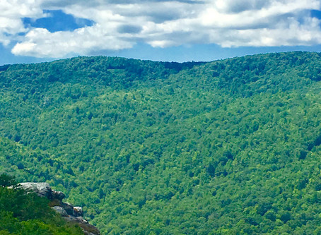 Top 5 Family-Friendly Parks and Trails for the Avid (and Not So Avid) Hiker