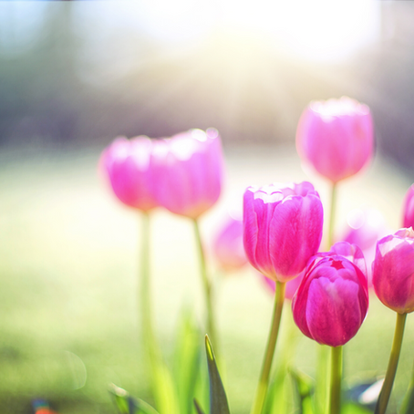 Start a New Morning Routine: a Spring revival in just 10-minutes each day