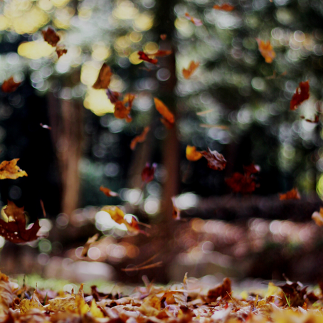 7 Ways to Rejuvenate for Fall