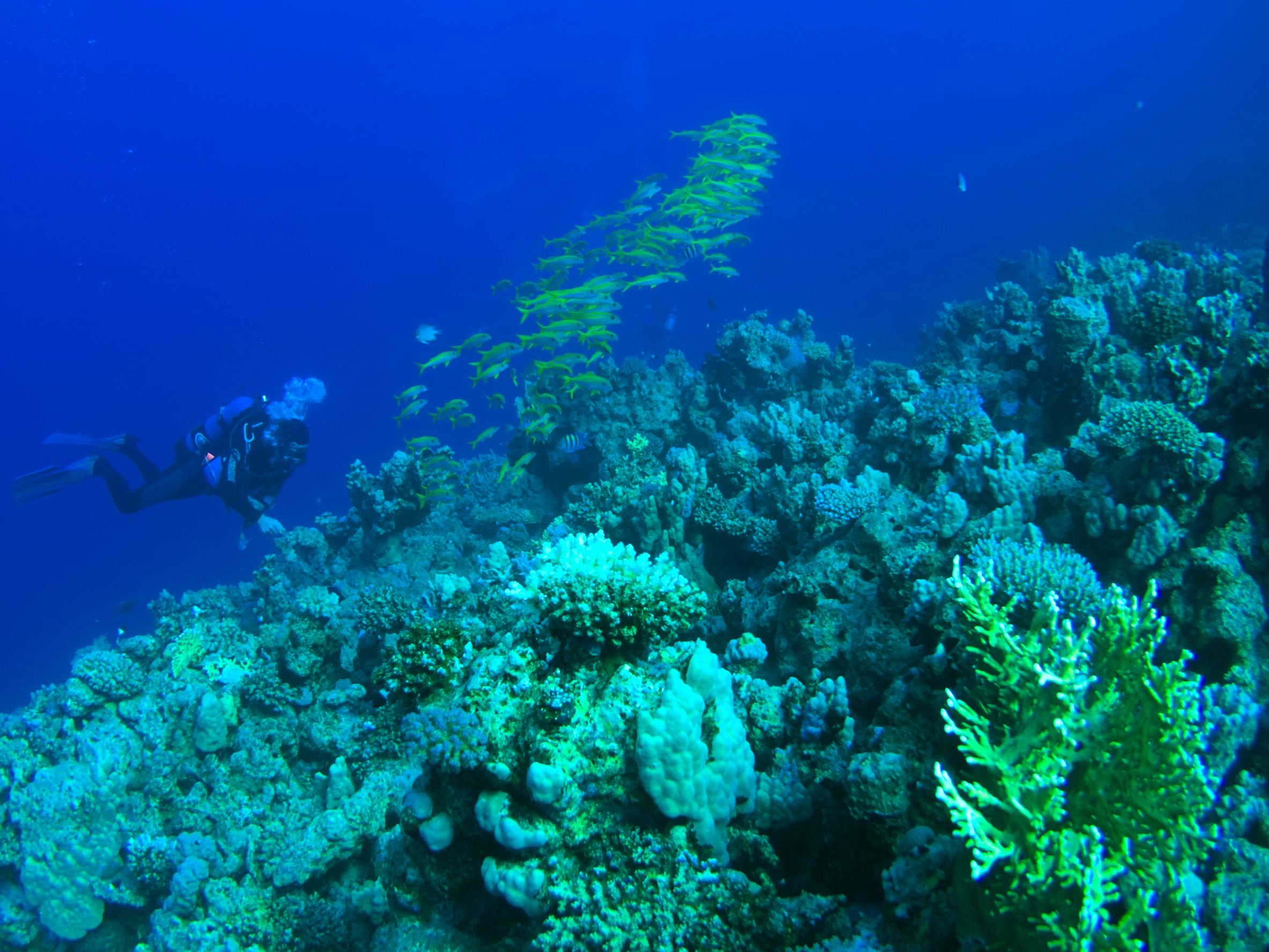 Corals Garden