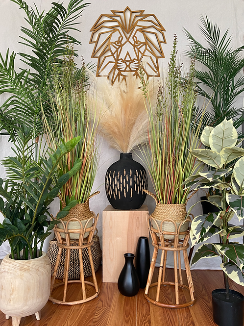 Safari Plant Collection