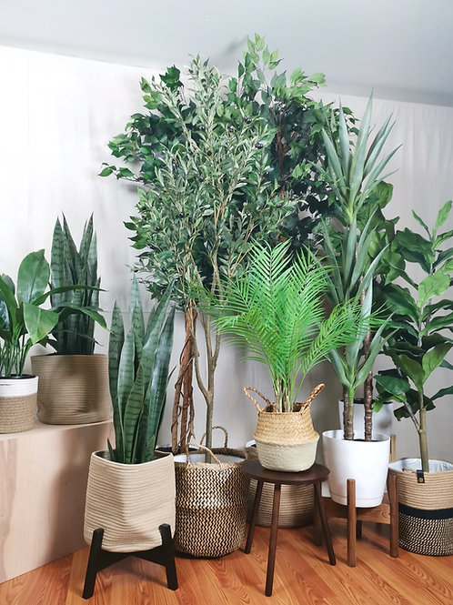 Mediterranean Plant Collection