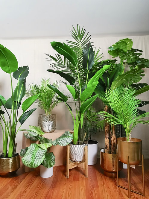 Tropical Plant Collection