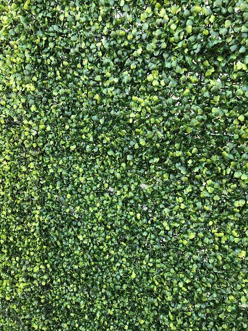 Plain Hedge Wall